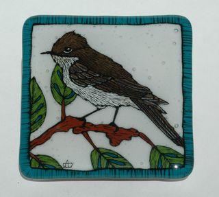 Olive Sided Flycatcher 1